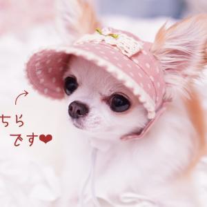 犬の帽子☆かぶりもの♪