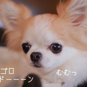 憧れの『看板犬』♪