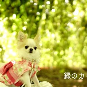 わん連れ☆夏の外出時の親心
