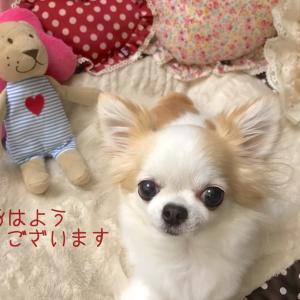 愛犬との暮らし☆飼い主編