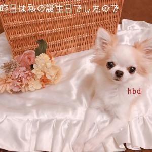 我が家の愛犬☆歯磨きグッズ