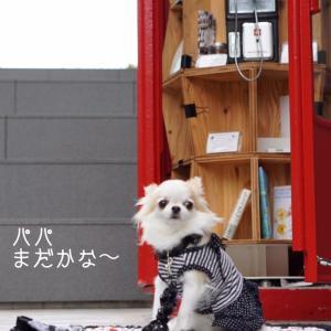 愛犬との暮らし☆初秋の誓い