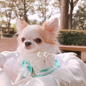 秋桜☆開花状況in昭和記念公園