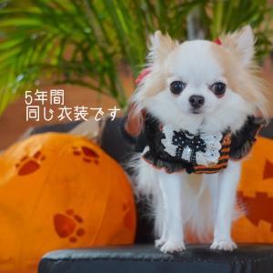 年季の入った犬服コス