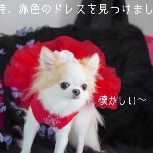 犬服犬用品のタイミング