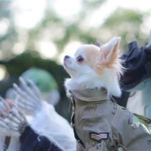 愛犬の気遣い