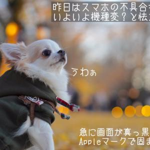 スマホと愛犬の写真問題
