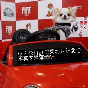 可愛い☆に惹かれるdog goods