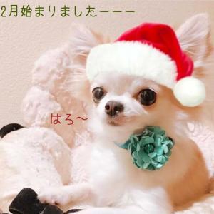 嬉しいプレゼント☆