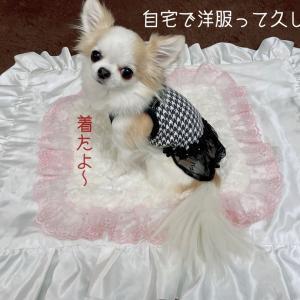OINUSAMAの犬服犬用品