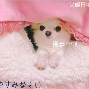 小型犬と室内遊び☆お宝探し♪