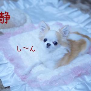 愛犬の『音』反応