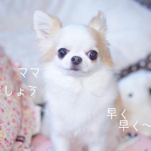 愛犬の趣味♪