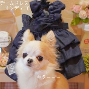 愛犬☆おウチ撮影会♪の裏側