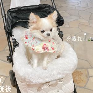 動物病院奮闘記