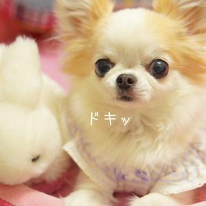 愛犬の『苦手』がトリプルで訪れる日