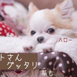 愛犬の『苦手を克服』の特別感♪