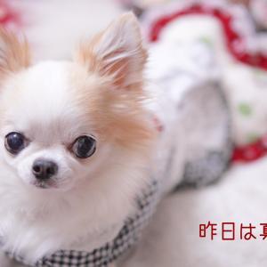 愛犬の熱対策と犬用品修理のその後