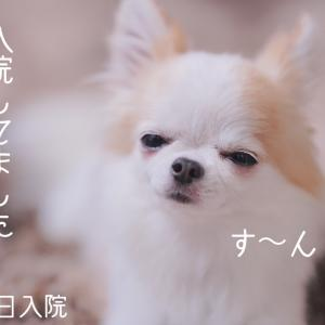 〜ご報告〜