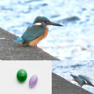 渓流の宝石に出会いました