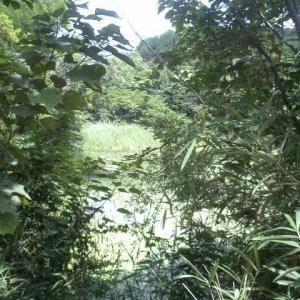 茂平の堂面池