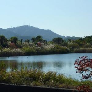 富岡湾干拓の遊水池