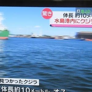 クジラが水島港で見つかった