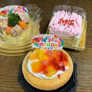 ここあのお誕生日