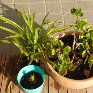 たくましい植物たち