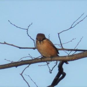 河畔の小鳥たち&'和を以て貴し'再考