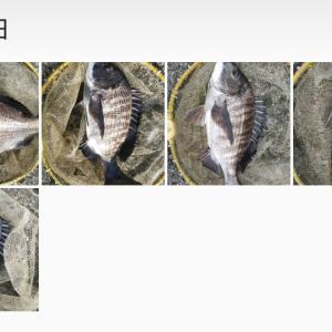 5月2日(木) もっと釣りたかった❗️ ヘチ釣り