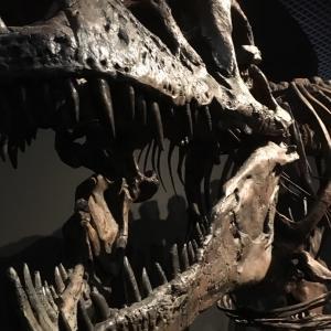 化石と仮説