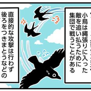 モビング(鳥の世界と人間世界での意味の違い)