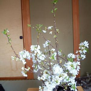 桃や桜の風情を、躍動感をつかってうみだす