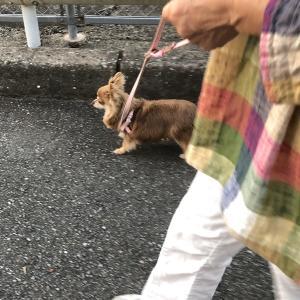 ルンルンお散歩