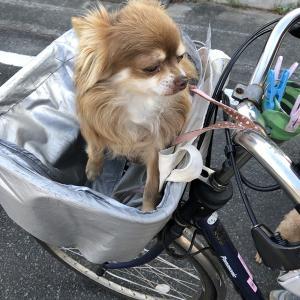 自転車に乗ろう!