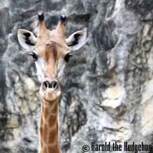 【RAMA 5】Dusit Zoo