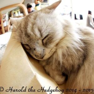 【THONGLOR soi 53】バンコクのネコカフェPURR CAT CAFE CLUB その1