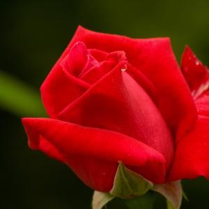 赤と相性の良い色コーデ(赤着たい人参考に)