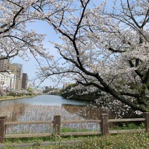 桜サクラさくら