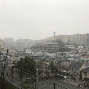 雪が降りだしました(^^)