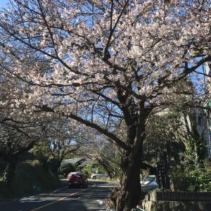 早春の鎌倉 逗子葉山 長井
