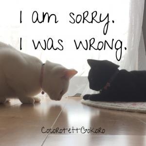 恥を晒してお詫びします