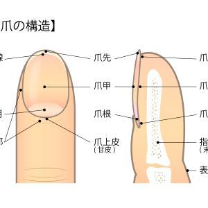 あらゆる症状を改善する爪もみマッサージ効果とやり方