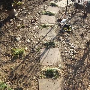 バラの小径、埋込み石の撤去完了
