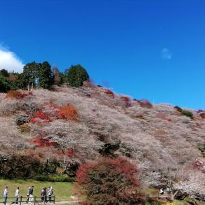 桜と紅葉のコラボ&ぐるっと80kmライド