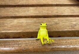 座る蛙 ヤドクガエル