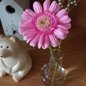 スーパーで花を買ってきました