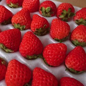 桃とイチゴを追加ポチ!リンガーハットも大特価に!