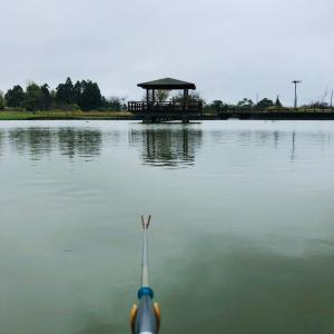 雨の宮島池。